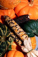 0142_Autumn Colors, Pumpkins