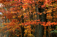 2953_Autumn in the Blue Ridge Mountains